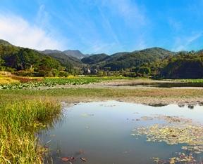 물미연꽃마을